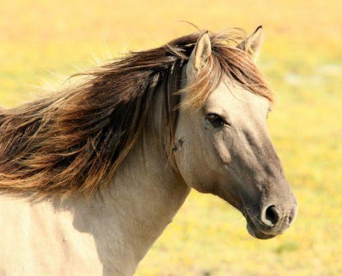 East Coast Horse Transport - horse