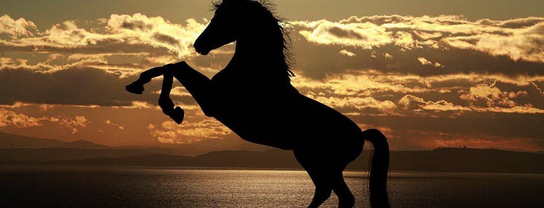 horse transport,