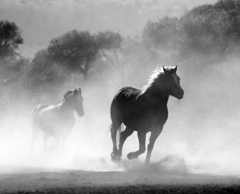 horses running through dust