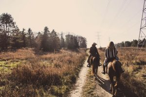 horses on trail ride