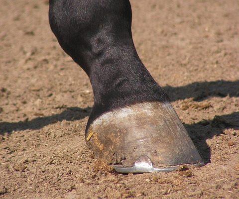 horse hoof, safe horse transport