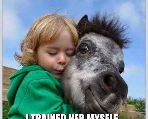 horse transport, horse transport queensland