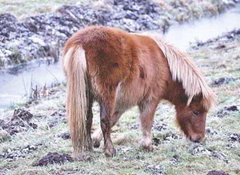 pony transport brisbane, pony transport melboune, pony transport sydney