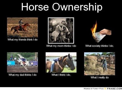 horse ownership, horse sydney, horse melbourne, horse brisbane,