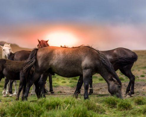 horse transport melbourne, horse transport Geelong, Horse transport Bendigo