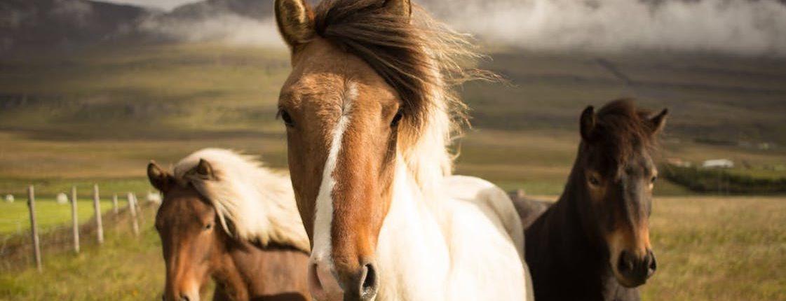 horse transport brisbane to melbourne, horse transport brisbane to sydney, horse transport melbourne to sydney, horse transport melbourne to brisbane