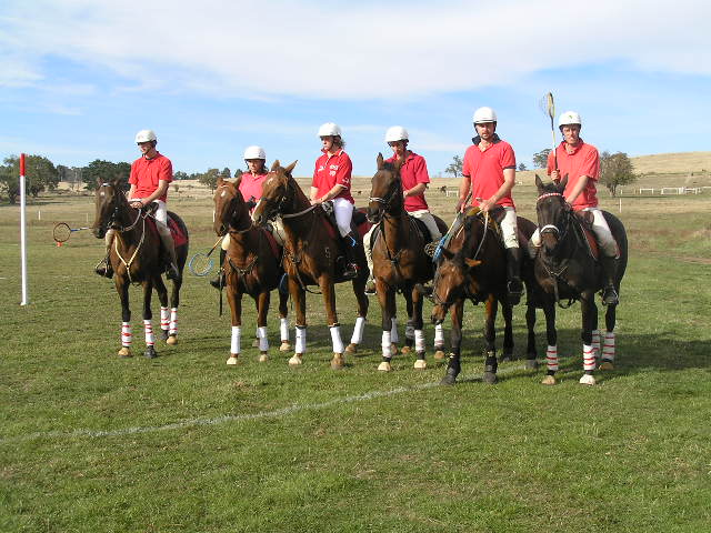 horser polo, horse people transport,
