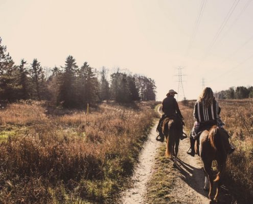 horses on trail ride, horse transportation
