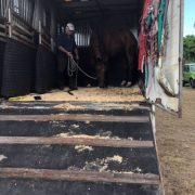 Horse transport brisbane, horse transport melbourne, horser transport sydney