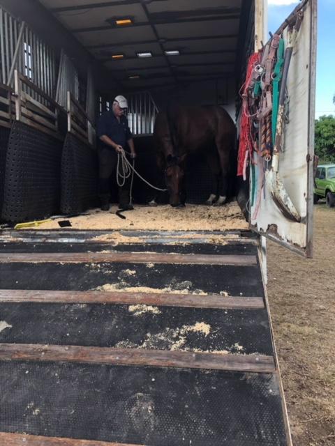 Horse transport brisbane, horse transport melbourne, horser transport sydney
