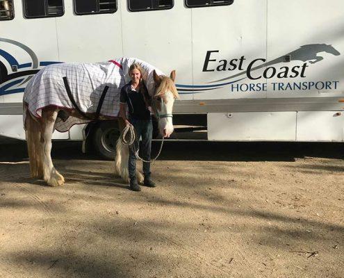 horse transport sydney