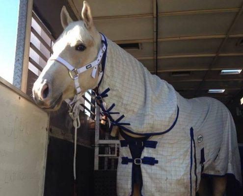 horse transport australia