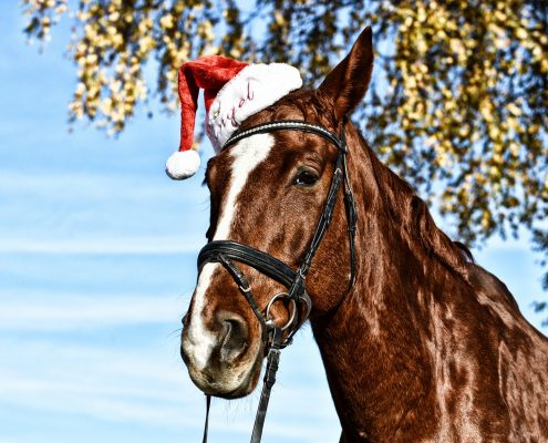 christmas treats for horses